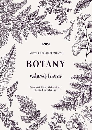 Botanical illustration with leaves. Boxwood, seeded eucalyptus, fern, maidenhair. Engraving style. Design elements.  イラスト・ベクター素材