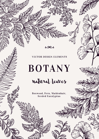 Botanical illustration with leaves. Boxwood, seeded eucalyptus, fern, maidenhair. Engraving style. Design elements. 일러스트