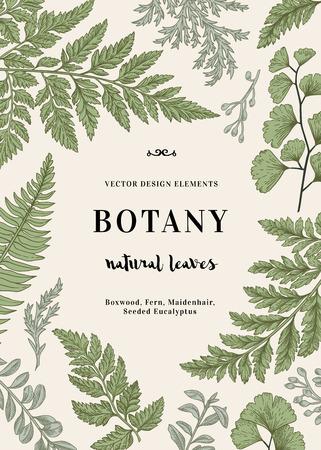 Ejemplo botánico con las hojas. Boj, eucalipto, helecho, culantrillo. el estilo de grabado. Elementos de diseño. En blanco y negro.