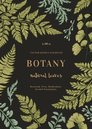 Botanical illustration with leaves on a black background. Boxwood, seeded eucalyptus, fern, maidenhair. Engraving style. Design elements.