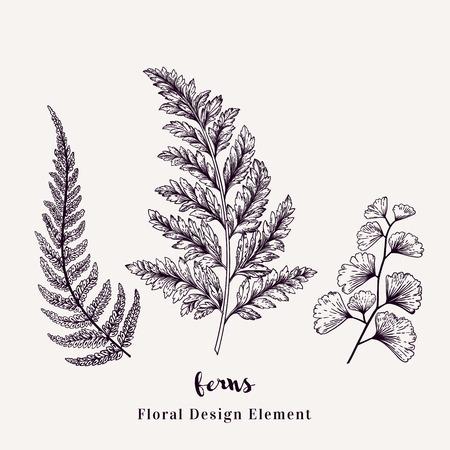 シダで設定します。白い背景で隔離の葉が付いている植物。