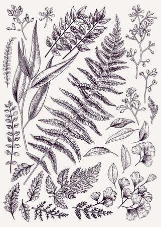 リーフのセットです。ヴィンテージ花柄背景です。ベクター デザイン要素です。分離されました。植物のイラスト。黒と白。