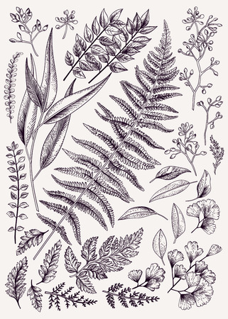 Set di foglie. Vintage floral background. Elementi di disegno vettoriale. Isolato. Illustrazione botanica. Bianco e nero. Archivio Fotografico - 68780573
