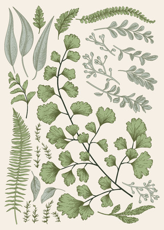 illustration isolated: Leaf set. Vintage floral background. Vector design elements. Isolated. Botanical illustration.