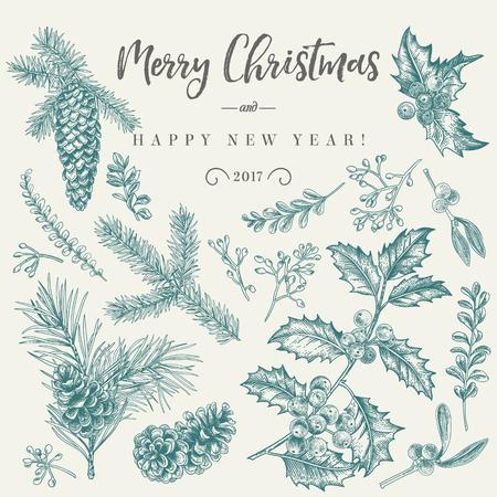Vector set met kerst planten. Botanische illustratie. Tak van hulst, sparren, dennen, buxus, sparren en dennenappels. Ontwerp elementen geïsoleerd op een witte achtergrond. Graveren stijl. Zwart en wit.