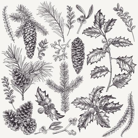 벡터 크리스마스 식물을 사용 하여 설정합니다. 식물 그림입니다. 홀리, 스프루스, 소나무, 회양목, 가문비 나무와 소나무 콘의 분기. 흰색 배경에 고립