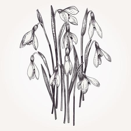 Ramo de campanillas. Conjunto. Flores vintage en estilo de grabado. Ilustración vectorial En blanco y negro.