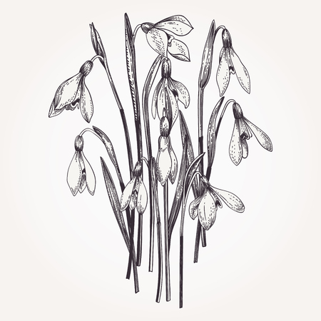 Bouquet of snowdrops. Set. Vintage flowers in engraving style. Vector illustration.  Black and white. Illustration
