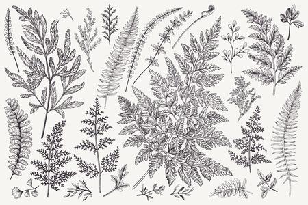 나뭇잎으로 설정합니다. 양치류. 벡터 디자인 요소입니다. 검정색과 흰색. 식물 그림입니다.