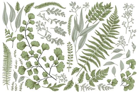 Set with leaves. Botanical illustration. Fern, eucalyptus, boxwood. Vintage floral background. Vector design elements. Isolated.
