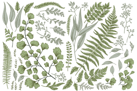 Set with leaves. Botanical illustration. Fern, eucalyptus, boxwood. Vintage floral background. Vector design elements. Isolated.
