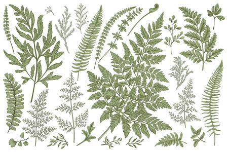 Set with leaves. Ferns.  Vector design elements. Botanical illustration.