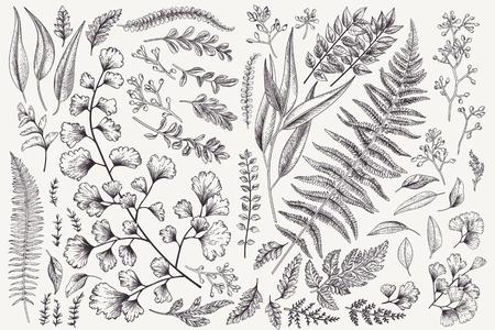 Set with leaves. Botanical illustration. Fern, eucalyptus, boxwood. Vintage floral background. Vector design elements. Isolated. Black and white. Illustration