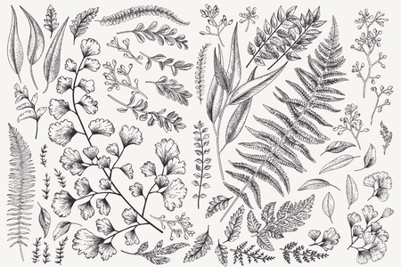 Set with leaves. Botanical illustration. Fern, eucalyptus, boxwood. Vintage floral background. Vector design elements. Isolated. Black and white. Vettoriali