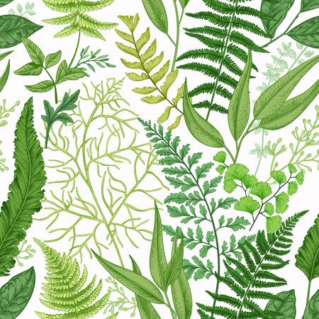 Spring leafy green seamless pattern. Vintage floral background with different ferns. Botanical illustration. Green.