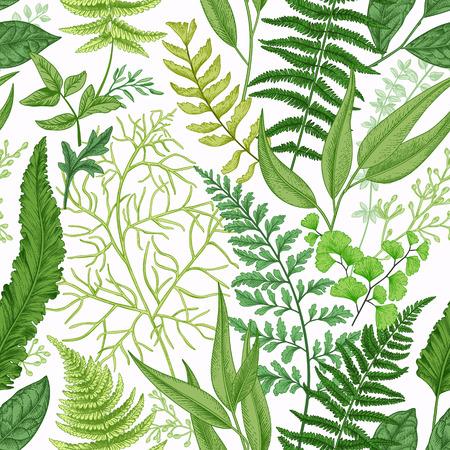 Spring leafy green seamless pattern. Vintage floral background with different ferns.  Botanical illustration. Green. Illustration