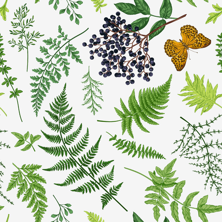 Vintage seamless pattern with leaves of ferns, elderberry and butterfly. Vector botanical illustration. Illustration