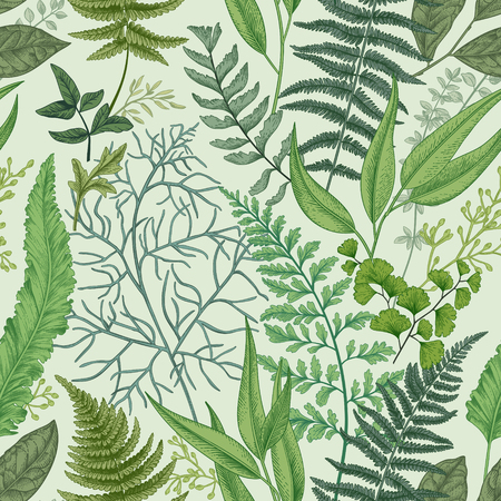 Seamless pattern with different ferns and leaves. Vintage floral background. Botanical illustration.