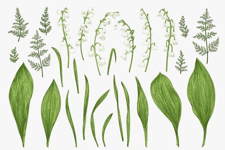 Hierbas y flores de primavera. Ilustración botánica.