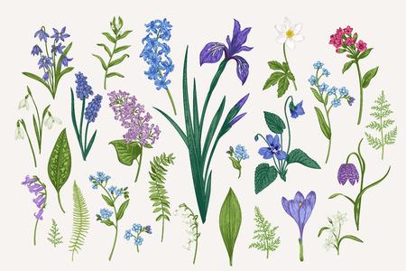 Set con foglie e fiori primaverili ed estivi. Illustrazione vettoriale botanico. Stile vintage. Vettoriali