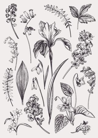 Set con fiori primaverili. Vintage illustrazione botanica. Elementi floreali vettoriali. Bianco e nero.