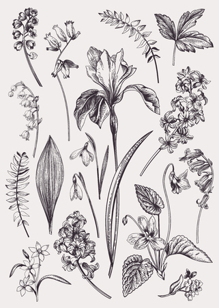 Set with spring flowers. Vintage botanical illustration. Vector floral elements. Black and white. Vettoriali