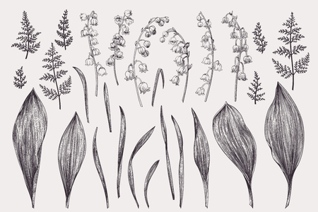 Set with lily of the valley. Black and white. Ilustracja