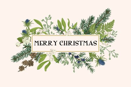 Christmas frame with winter plants. Botanical illustration. Composition with spruce, eucalyptus seeds, fern, juniper, mistletoe, larch cones, bluehead. Vector holiday card. Vektorgrafik