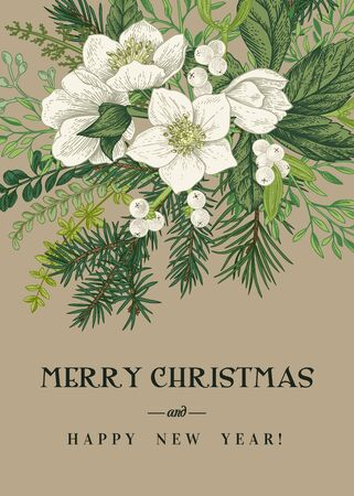 Vintage Greeting Card. Winter and Christmas background with a bouquet of evergreens, conifers and hellebore flowers. Vector botanical illustration. Kraft.