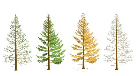 Larch in four seasons. Maple in winter, spring, summer, autumn. The tree changes its appearance with the change of season. In the fall, larch needles fall.
