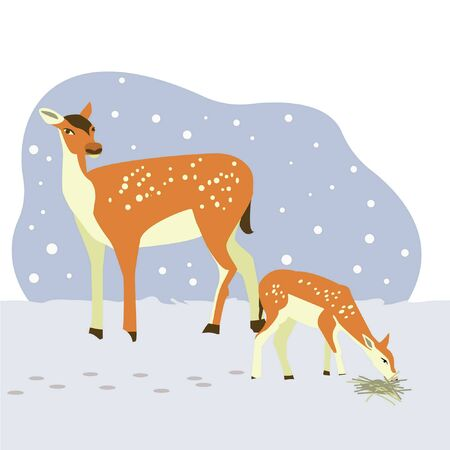 Family deer mom and fawn. The fawn is hungry, eating dry grass. Vector illustration.