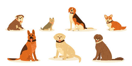Set cute happy dog breed. German Shepherd, Golden Retrieve, Beagle, Yorkshire Terrier, Pembroke Corgi, English Bulldog, Portuguese aquatic dog. Vector flat cartoon illustration.
