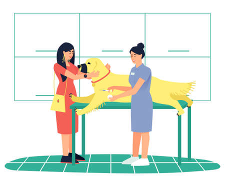 The woman brought her beloved dog, Labrador Retriever, to the veterinary clinic. Your dog needs a shot or vaccination. The dog lies in a muzzle. Flat vector illustration.