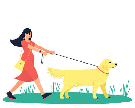 A woman walks with her beloved dog, the Labrador Retriever. Walk with your beloved pet. A large strong dog pulls its owner along. Flat vector illustration.