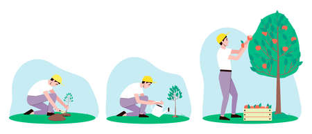 Apple tree care illustrations set. A male gardener has planted a plant. Watering the apple tree from the watering can. The gardener harvests the apple tree. Flat vector illustration.