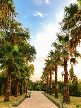 Alley with palm trees and a skmeyk in the Park of Southern Cultures, Adler, Sochi, Russia.