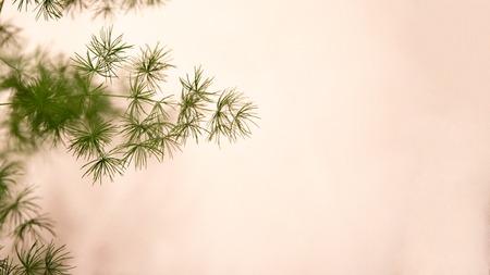 One green asparagus branch on beigen background