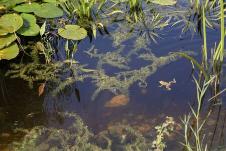 Small pond surrounded with green plants and a small frog