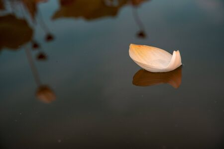 Petal of water lilly floating on surface Stok Fotoğraf