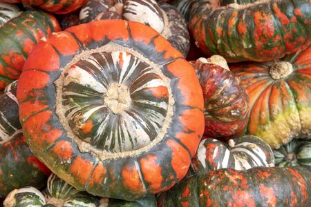 Many orange and green butter cup pumpkins
