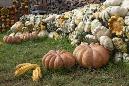 Lot of pumpkin different forms on grass