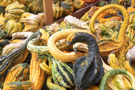 Many different pumpkins in different strange forms