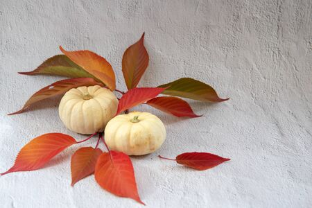 Two white pumpkins with red and green leaves on white background