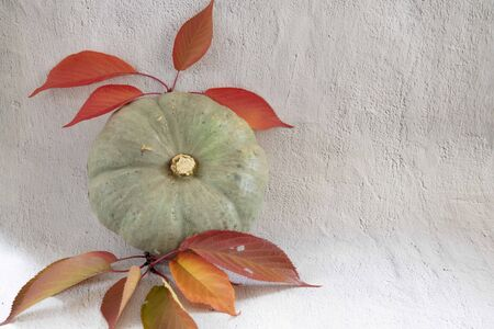 Green flat pumpking with red leaves on white background