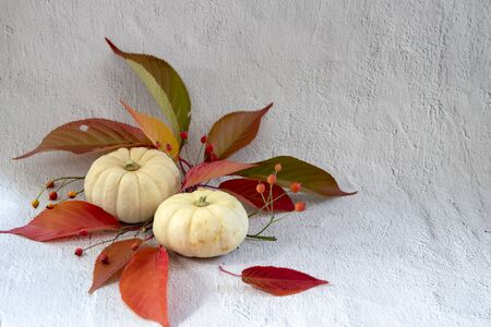Two white pumpkins with red and green leaves and berries on white background Stok Fotoğraf
