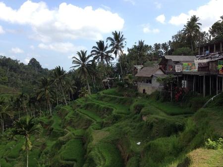 tegalalang: Paddy field terraces at tegalalang