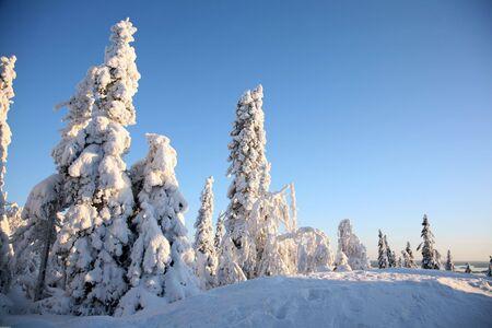 winter finland: Winter, Finland, Koli.