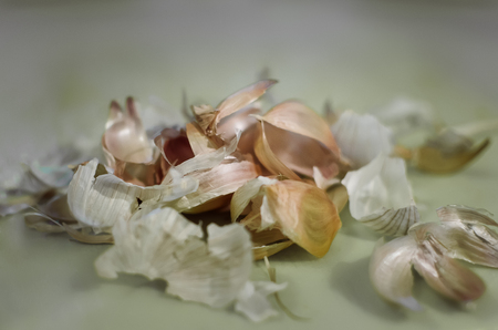 husks from garlic on a table, close-up