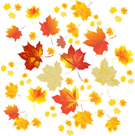 Multi-colored autumn leaves on a white background. Vector illustration. Stock Photo