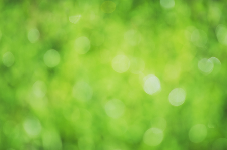 Beautiful blurred natural creative green background for use in design.